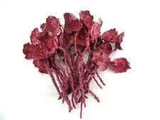 Trockenblumen Palmenblüten 25 Stiele Erika Coco Rose Flower Stone Washes