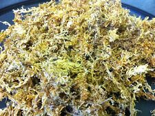 Chilean Long Grain Sphagnum Moss 5Ltr Pollywog Frog Newt Gecko Reptile Substrate