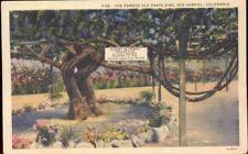 (ep1) San Gabriel CA: Famous Old Grape Vine