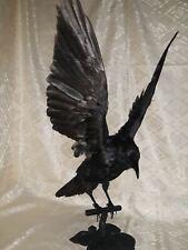 Stuffed Raven  on a wooden sheet imitation flight Taxidermy trophy  Mount