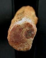 Petrified Agate Fossil Wood Limb End Specimen 1900 Foreclosure Sale #2549
