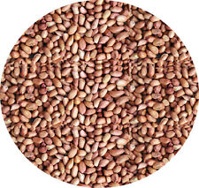 WHOLE PEANUTS 100g  Garden Wild Bird Seed Feed Food Of Nuts Delicious Nutritious
