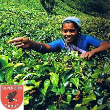 100g Ceylon OP TEA (Orange Pekoe) Whole Leaf Schwarzer Hochland Tee