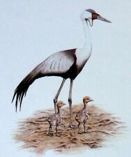 WADER OF THE MALAWI WWF Birds BIRD ENVELOPE Premier Day 1° FDC 494