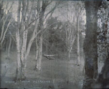 "Antique Vintage Glass Negative ""Woods Near Peranwell"" Late 1800s 10.5cm x 8cm"
