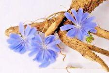 Seeds organic Chicory coffee root ERA from Ukraine