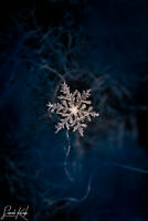 Snowflake Photograph Print, Wall Art - Unframed, New, 4x6, 5x7