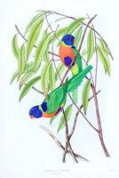 """Vintage John Gould Australian Bird Art CANVAS PRINT~ Rainbow Lorikeet 16""""X12"""""""
