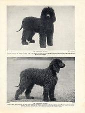 IRISH WATER SPANIEL TWO 1930'S NAMED CHAMPION DOGS OLD ORIGINAL DOG PRINT