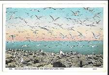Sea Gulls on the Shore of the Great Salt Lake, Utah, PPC, Unposted, By Evans