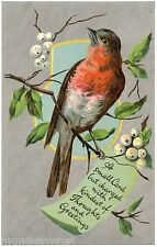 MAGNIFIQUE ROUGE GORGE. NICE ROBIN . REDBREAST. OISEAUX. BIRD.