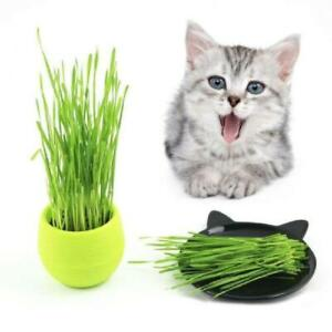 400pcs/set Organic Cat Grass Seeds Wheat Catnip Healthy Treat Plant For Pets