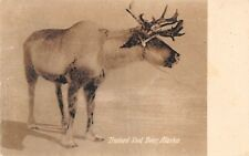 Trained Sled Deer Caribou Alaska ALSK 089