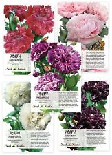 Peony Poppy Seed Collection (5 Individual Seed Packets) Non-Gmo