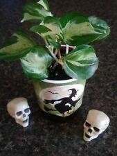 Halloween Pearls and Jade Devil's Ivy (Pothos)