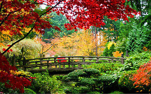 STUNNING AUTUMN JAPANESE GARDEN LANDSCAPE #265 FRAMED CANVAS ART PICTURE A1 SIZE