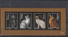 Guyana 2013 MNH Cats 4v M/S Pets Chartreux Bobtail Siamese Abyssinian Animals