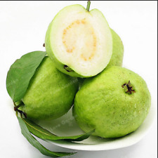 Guava Bonsai Delicious Tropical Fruit Plants Tree Garden Home New 100 Pcs Seeds