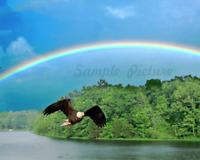 Rainbow Bald Eagle Bathroom Home Decor Grey Red Green Photo Picture 8x10 Art