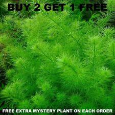 Myrio Filigree Buy 2 Get 1 Free planted tank aquarium live plant aquascaping