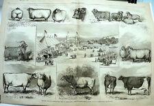 Agricultural Fair at Narraganset Park, Providence, Rhode Island   -  1867