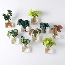 Pack of 2 Wall Hanging Planter Glass Hanging Plant Container Air Plant Terrarium