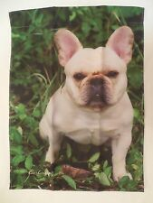 French Bulldog Cream / Fawn for every day use decorative Garden flag