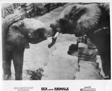 """Sex and Animals"", 1969 vintage movie photo, Elephants"