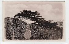 CEDAR TREE, CULROSS: Fife postcard (C25417)