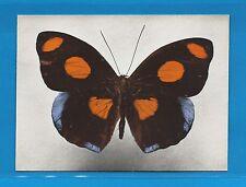 Carte Publicitaire Papillons Catenophele numilia Amérique Tropicale