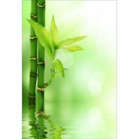 Stickers muraux déco : bambou 1394
