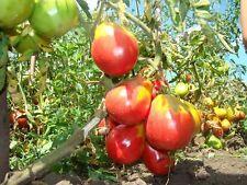 Rare Tomato Seeds Ivana Kupala Heirloom Vegetable Seeds