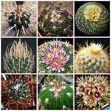 100 semi in miscuglio di Echinofossulocactus mix ,piante grasse,seed cactus mix