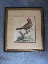 """1761 HAND COLORED COPPER ENGRAVED """"RED CHECKED WOODPECKER"""" by GEORGE EDWARDS,"""