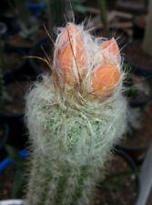 Temperate Medium 7 (15 to - ° C) Plants & Seedlings