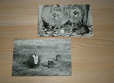1940's MALHEUR REFUGE OREGON RPPC BLACK WHITE POSTCARDS OLD PENNY POST CARD  -