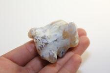 Snakeskin Agate Beautiful Rock COLLECTORS GRADE Specimen Polished From Oregon