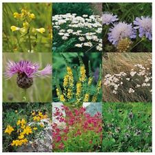 Wildflower Seeds - Heavy Clay Soil Mix - 100 gms