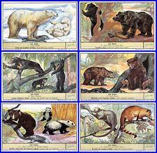 Lot 6 Chromos Liebig Series All Bear