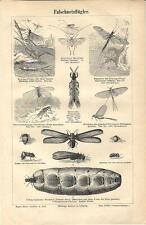 Stampa antica INSETTI INSECTA Libellula ed altri 1890 Old antique print