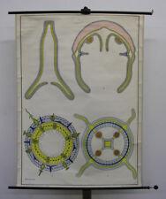Wall Art Dr Lips blueprints of Animal Kingdom Hollow Animals 100x134 ~ 1960 Vint...