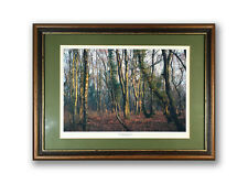 """Winter Morning in the Forest"" - Photograph of Bluebell woods in winter"