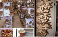 Pioppino Pflanzen für den Wintergarten das Gewächshaus exotische Topfstaude Deko