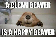 Funny Sexy Clean Happy Beaver  Refrigerator / Tool  Box /  Magnet Man Cave Item