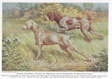Weimaraner / German Shorthaired Pointer - Vintage Color Dog Art Print - Matted