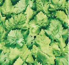 Wandtattoo Wandsticker 235 Baum Laubbaum Wald Buche Zertifikato