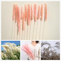 15Pcs/Set Natural Dried Pampas Grass Reed Home Wedding Flower Bunch Decor