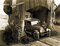 "1920 Pacific Highway Through a Washington Red Cedar Old Photo 8.5"" x 11"" Reprint"