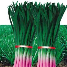 200 pcs purple root Garlic chives seeds Green Vegetable