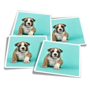 4x Square Stickers 10 cm - English Bulldog Puppy Dog Bull  #21498